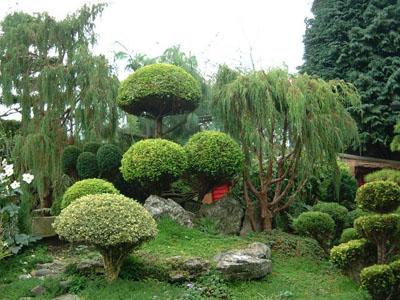 При создании сада различают