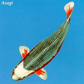 Асаги